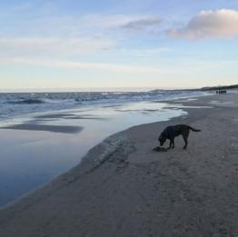 Urlaub Usedom mit Hund Ferienhaus kpl eingezäuntes Grundstück 800 m zum Strand
